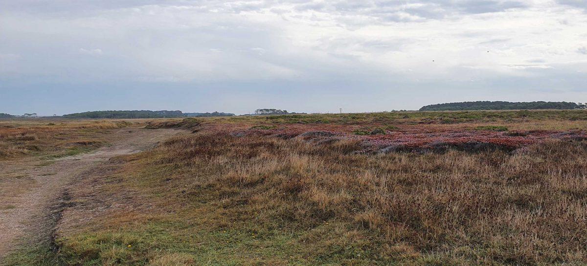 Plateau avec une végétation adaptée au climat venteux de la côte ouest